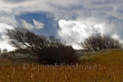 Grau-weiße Wolken hinter Dünengebüsch