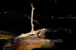 beleuchtetes Totholz vor dunklem Hintergrund