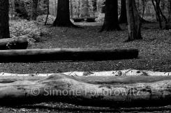 Baumstämme vor einem Waldweg