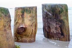 Kratzer und Algen auf Holzbuhne