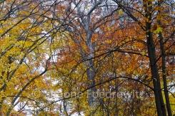 Herbstlaub und Zweige von Bäumen