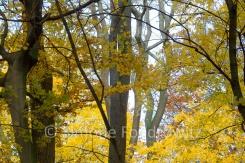 Baumstämme und gelbes Herbstlaub