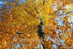 Baumkrone mit goldenen Herbstlaub vor blauen Himmel
