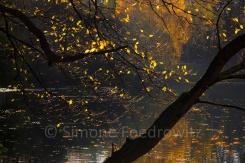 Baum mit Herbstlaub am See