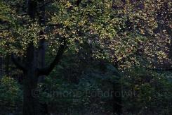 leuchtende gelbe Blätter vor Bäumen