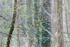 Baumstämme mit bunten belaubten Zweigen