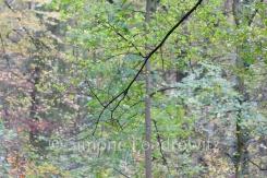 Zweige mit bunten Blättern