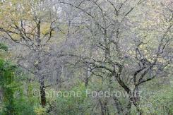 Bäume mit bunten Blättern