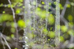 grüne verschwommene Blätter vor Baumstämmen