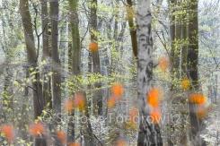 rote verschwommene Blätter vor Baumstämmen