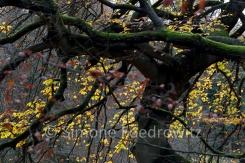 skurriler, moosbewachsener Baumstamm mit gelben Blättern