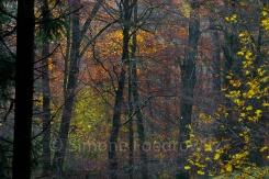 Bäume mit leuchtendem Herbstlaub