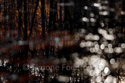 Baumstaemme spiegeln sich im Wasser