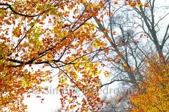 Baumkronen mit orangen Blättern