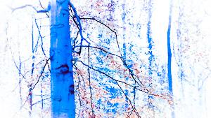 blauer Baumstamm