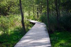 Holzbohlenweg am Darßer Ort