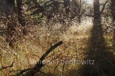 Dünenwald mit Gräsern und Bäumen am Darßer Ort