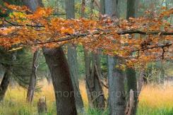 Baüme im Darßer Wald