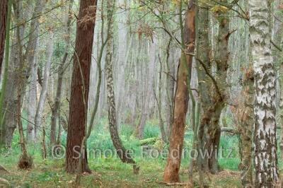 Bäume und Farn im Darßer Wald