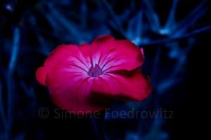 lila Blüte auf blau
