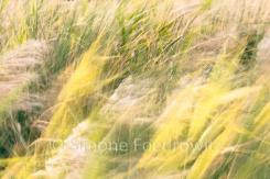 verwischte gelbe Gräser
