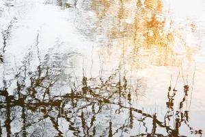 Wasserspiegelung von Zweigen