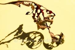 zerlöchertes rotes Blatt mit Schatten