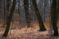 Bäume stehen im orangen Laub