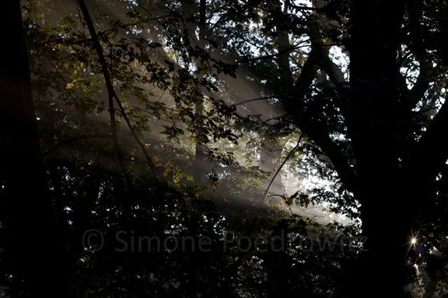 Sonnenstrahl im Blätterdach