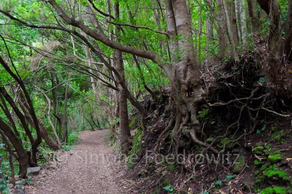 Baumwurzeln oberhalb eines Waldwegs