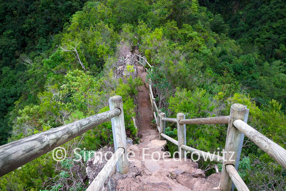 Brücke auf einer bewaldeten Anhöhe