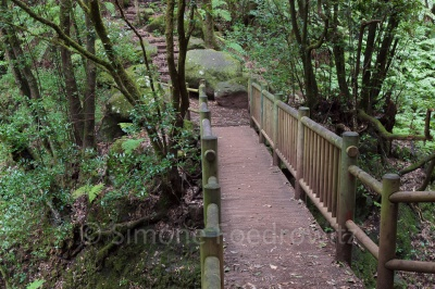 Holzbrücke über einer Schlucht
