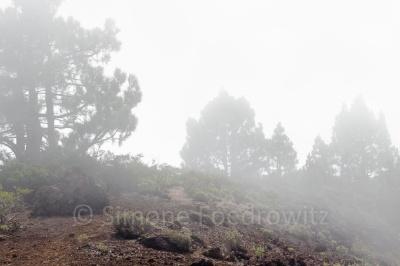 Vulkangrat mit Kiefern in Wolken