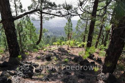 bewaldeter Hang mit Meerblick