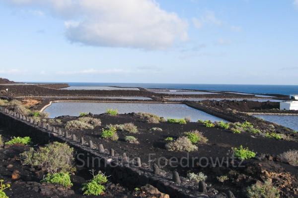 Salinen an der Meeresküste