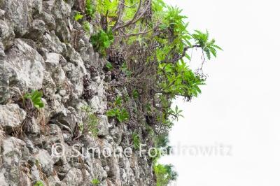 Pflanzen an einer Steinmauer