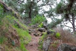 Waldweg mit Felsen und Bäumen