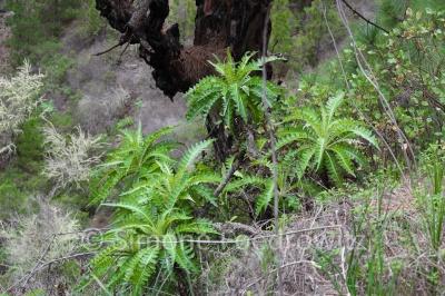 Pflanzen am Baumstamm
