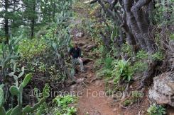 Wanderer auf einem Waldweg
