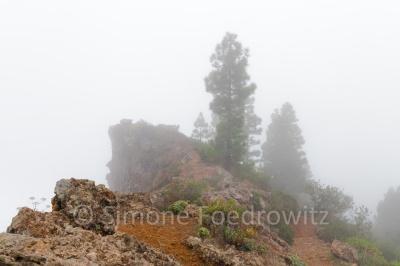 Felsen und Kiefern im Wolkennebel