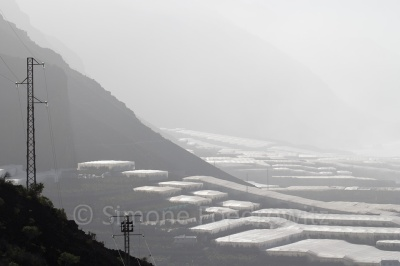 mit Plane überdeckte Bananen am Berghang