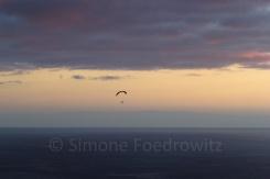 Paragleiter über dem Meer im Sonnenuntergang