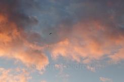 Paragleiter am wolkigen Himmel