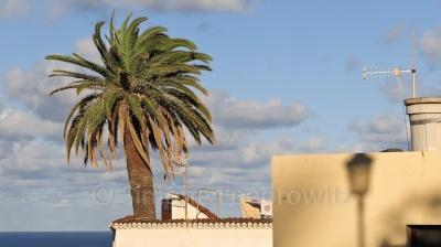 Palme vor blauem Himmel scheint aus dem Hausdach zu wachsen