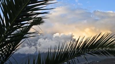 Hinter Palmwedel sind große Wolken am Horizont
