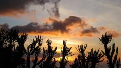 Pflanzen als Silhouette vor einem Sonnenuntergang