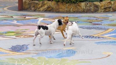 Drei spielende Hunde auf einem Mosaikboden
