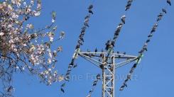 Tauben sitzen vor blauem Himmel auf einem Strommast