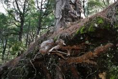 Baumwurzeln durchdringen eine Abbruchkante