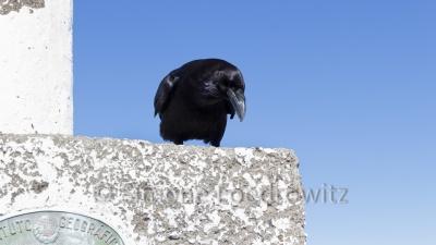 Krähe sitzt auf einem Stein